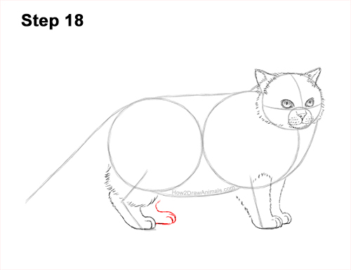 How to Draw Himalayan Cat Kitten Seal Point 18