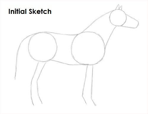 Draw Horse Sketch