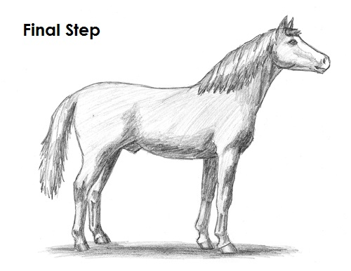 Draw Horse Final