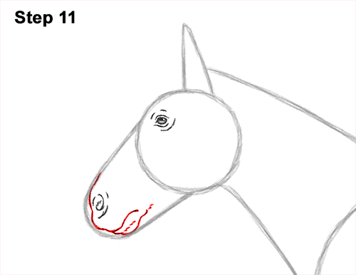 How to Draw a Brown Horse Color Side View 11