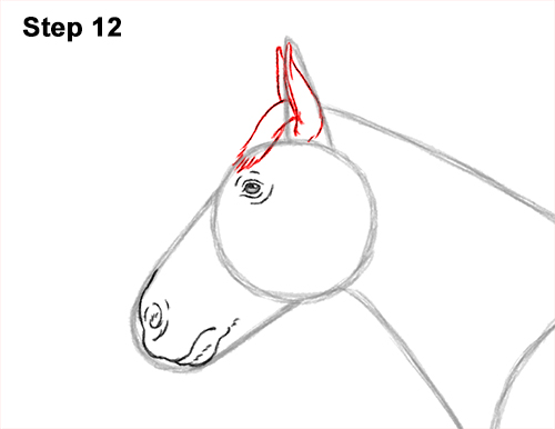How to Draw a Brown Horse Color Side View 12