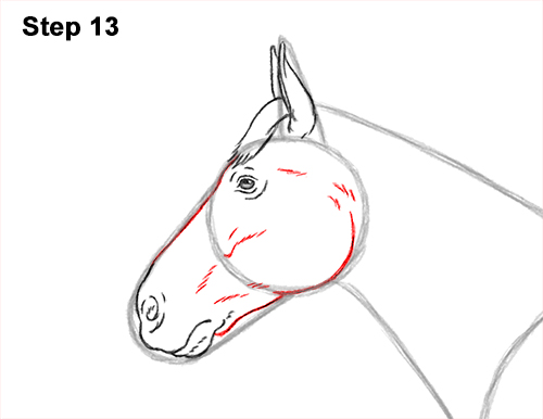 How to Draw a Brown Horse Color Side View 13