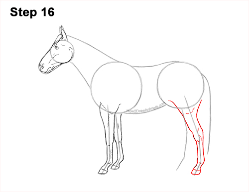 How to Draw a Brown Horse Color Side View 16