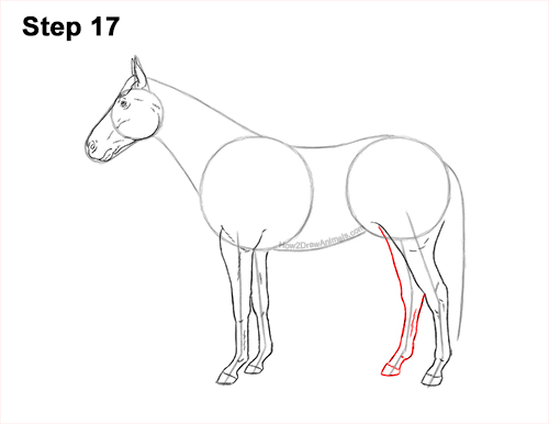 How to Draw a Brown Horse Color Side View 17