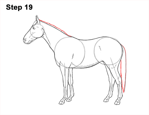 How to Draw a Brown Horse Color Side View 19