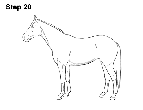 How to Draw a Brown Horse Color Side View 20