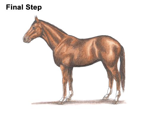 How to Draw a Brown Horse Color Side View