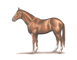 How to Draw a Horse Color Side View