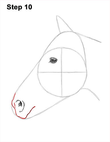 How to Draw Horse Head Face Profile Portrait 10