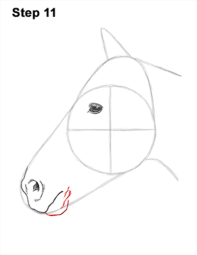 How to Draw Horse Head Face Profile Portrait 11
