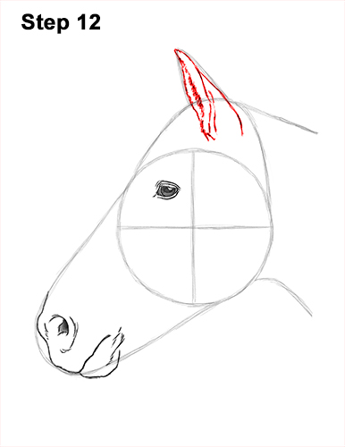 How to Draw Horse Head Face Profile Portrait 12