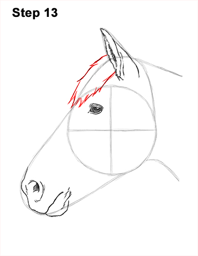 How to Draw Horse Head Face Profile Portrait 13