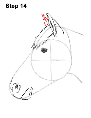How to Draw Horse Head Face Profile Portrait 14