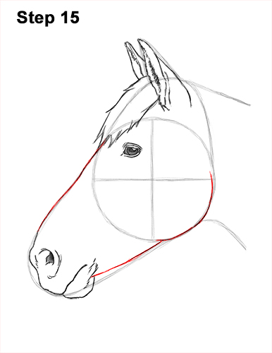 How to Draw Horse Head Face Profile Portrait 15