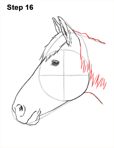 How to Draw Horse Head Face Profile Portrait 16
