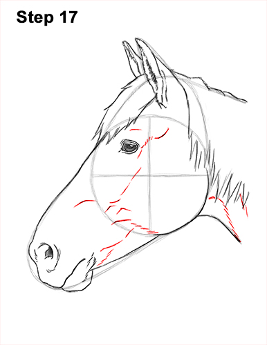 How to Draw Horse Head Face Profile Portrait 17