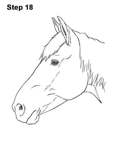 How to Draw Horse Head Face Profile Portrait 18