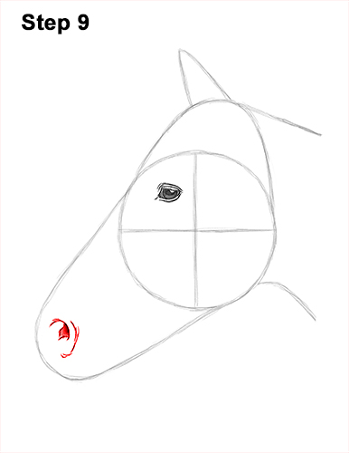 How to Draw Horse Head Face Profile Portrait 9