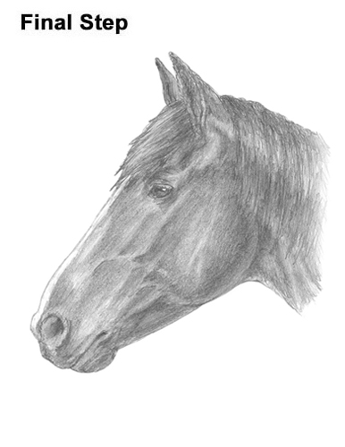 How to Draw Horse Head Face Profile Portrait