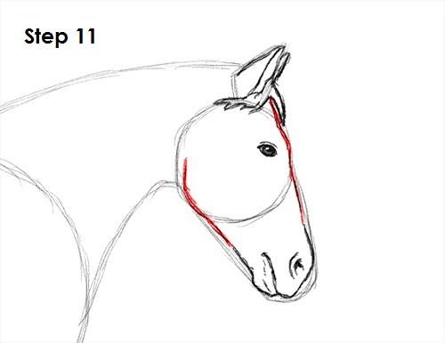 Draw a Horse Jumping 11