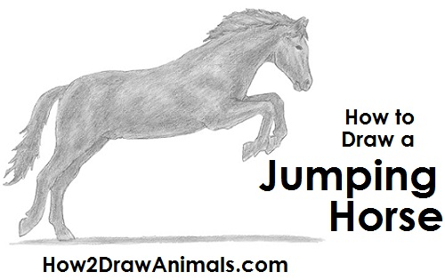 Draw a Horse Jumping