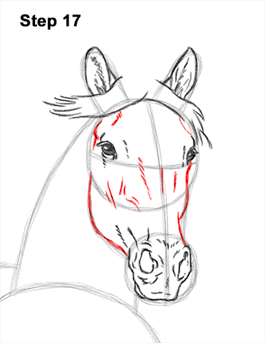 How to Draw Horse Running Front Forward 17