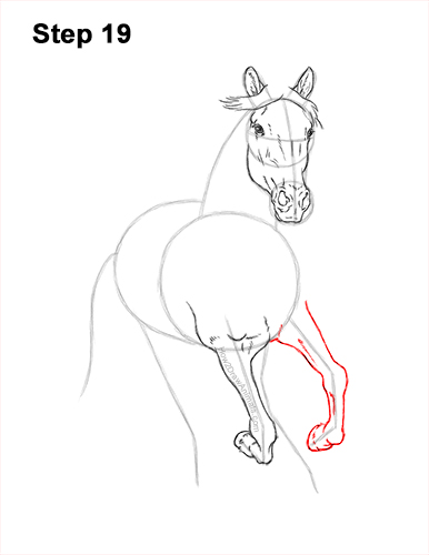 How to Draw Horse Running Front Forward 19