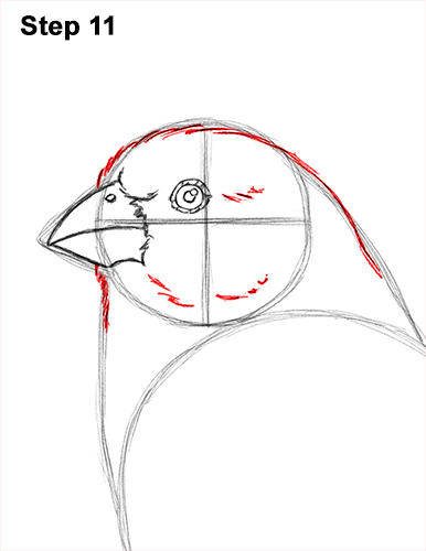 How to Draw Red House Finch Bird Color 11