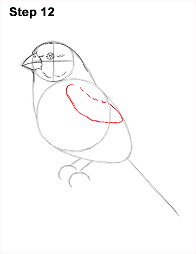 How to Draw Red House Finch Bird Color 12