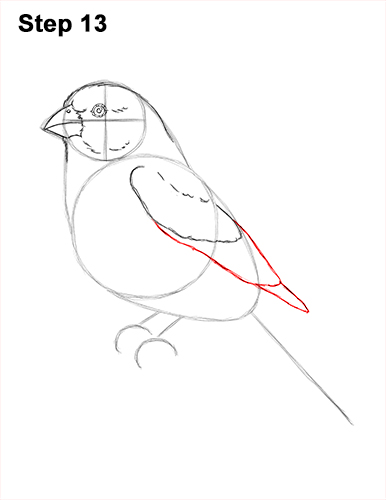 How to Draw Red House Finch Bird Color 13