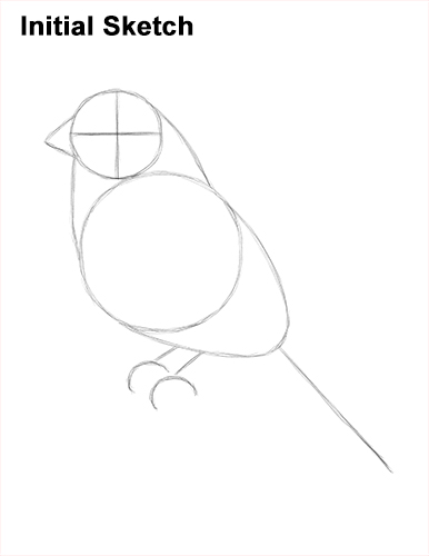 How to Draw Red House Finch Bird Color Sketch