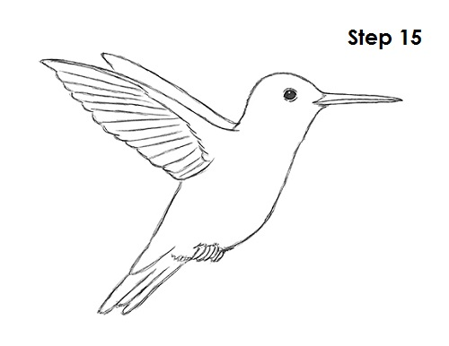 Draw Hummingbird 15