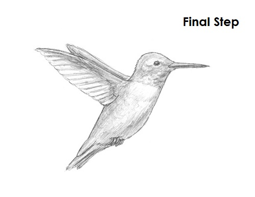 Draw Hummingbird Final