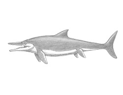 How to Draw an Ichthyosaurus Dinosaur Fish Lizard Side View