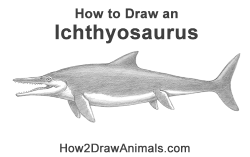 How to Draw an Ichthyosaurus Dinosaur Side View
