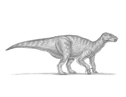 How to Draw an Iguanodon Dinosaur Side