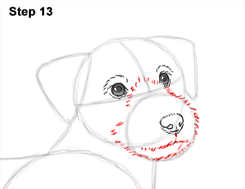 How to Draw a Cute Jack Russell Terrier Puppy Dog 13