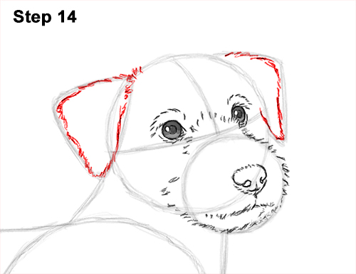 How to Draw a Cute Jack Russell Terrier Puppy Dog 14