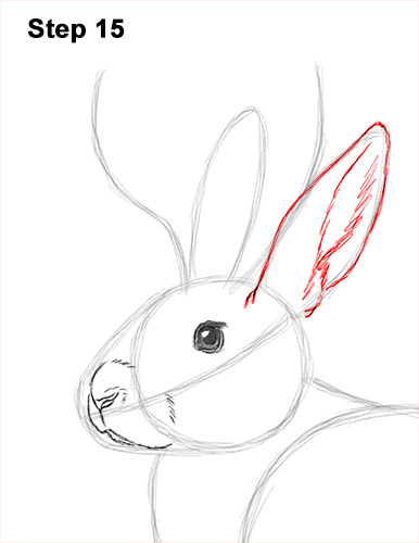 How to Draw a Jackalope Rabbit Antlers 15