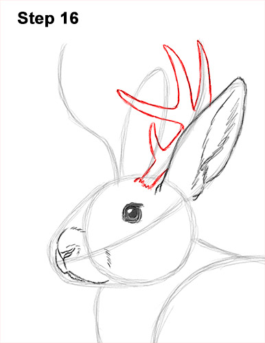 How to Draw a Jackalope Rabbit Antlers 16