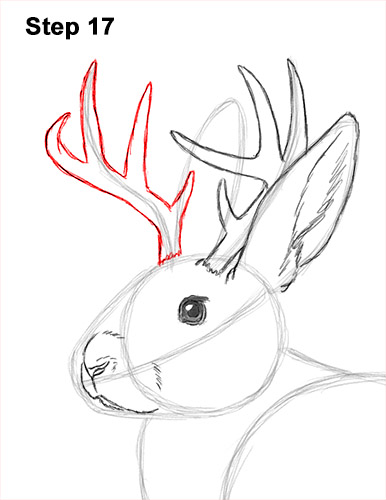 How to Draw a Jackalope Rabbit Antlers 17