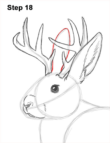How to Draw a Jackalope Rabbit Antlers 18