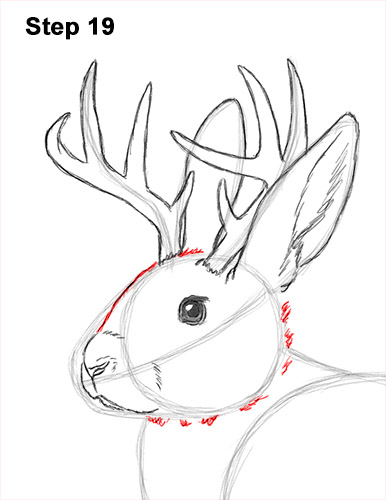 How to Draw a Jackalope Rabbit Antlers 19