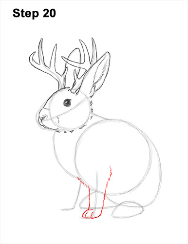 How to Draw a Jackalope Rabbit Antlers 20
