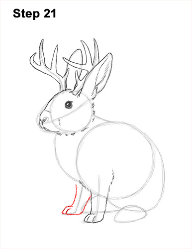 How to Draw a Jackalope Rabbit Antlers 21