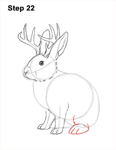 How to Draw a Jackalope Rabbit Antlers 22