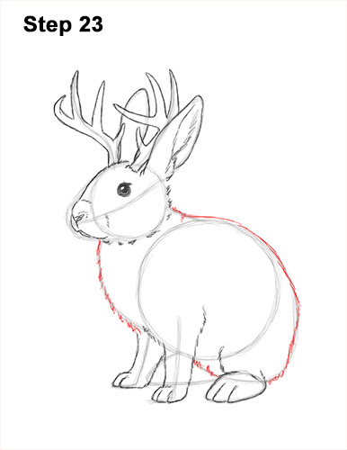 How to Draw a Jackalope Rabbit Antlers 23