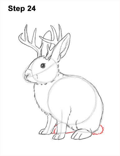 How to Draw a Jackalope Rabbit Antlers 24