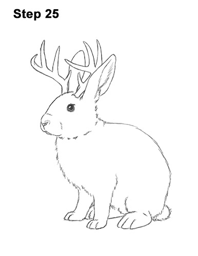 How to Draw a Jackalope Rabbit Antlers 25