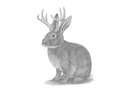 How to Draw a Jackalope Rabbit Antlers